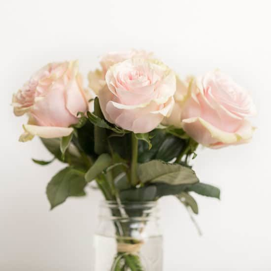 Roses Pink Pick Me Up