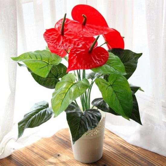 "Anthurium ""Love heart"""