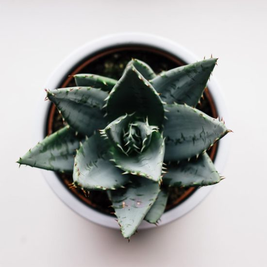 "Aloe vera ""Believe in yourself"""